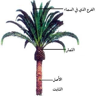 شجرة الإخلاص